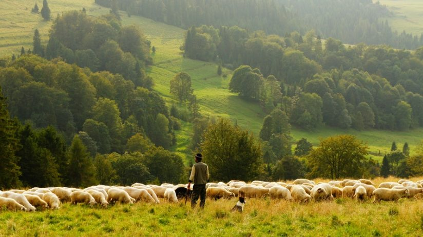 Shepherding + Obedience