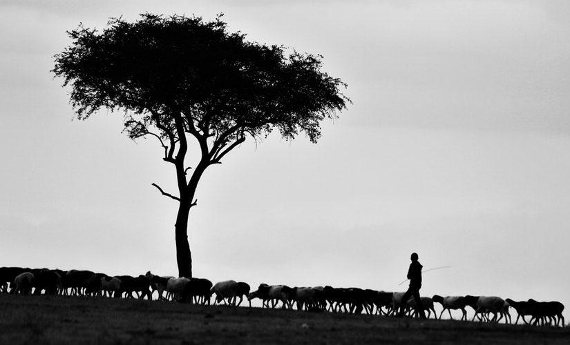 Meeting My Shepherd